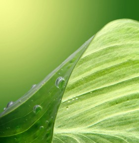 Green leafy drops HD picture  4