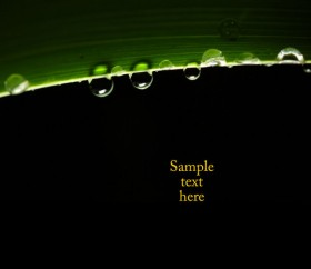 Green leafy drops HD pictures
