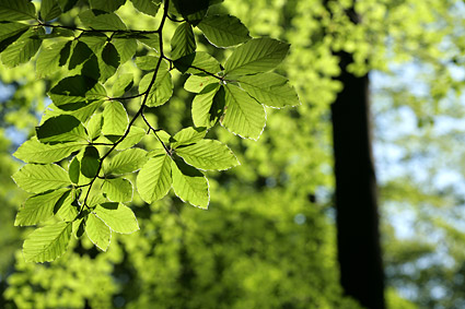 Green vitality leaves picture material