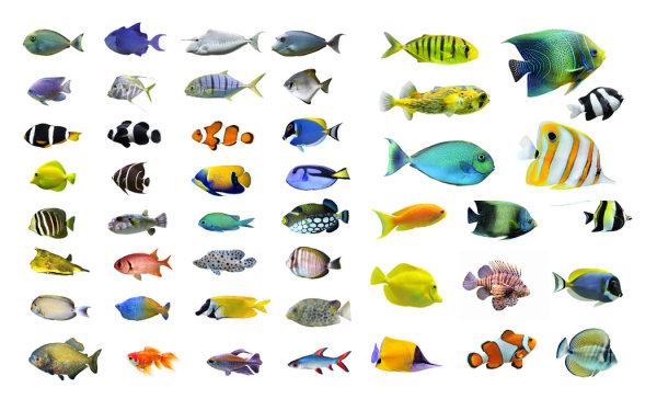 HD picture  2 variety of fish