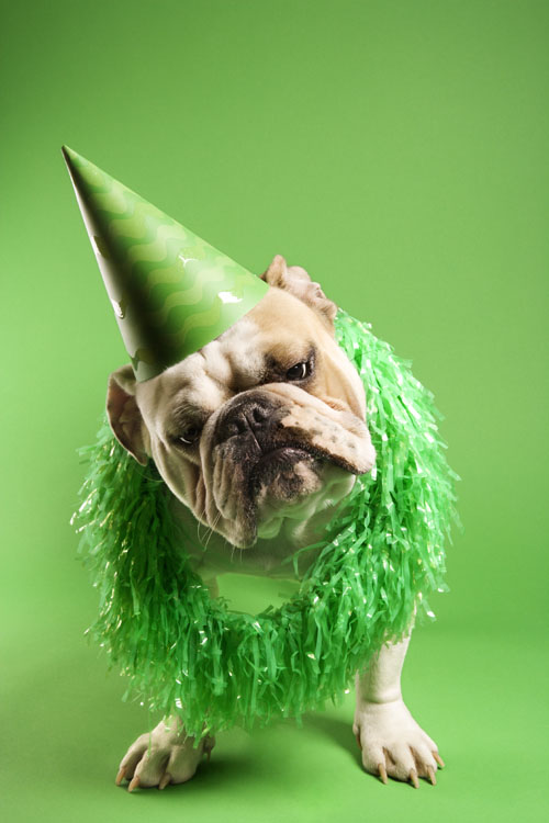 HD picture green background with a hat dog