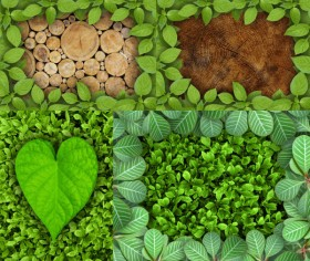 HD pictures of beautiful green leaves border