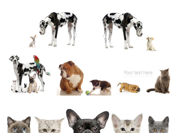 HD pictures of cute cats and dogs