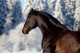 High quality pictures of galloping horses 03   HD Images