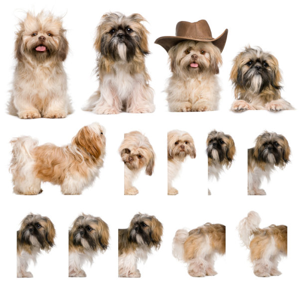 High quality pictures of the cute little dog   HD Images