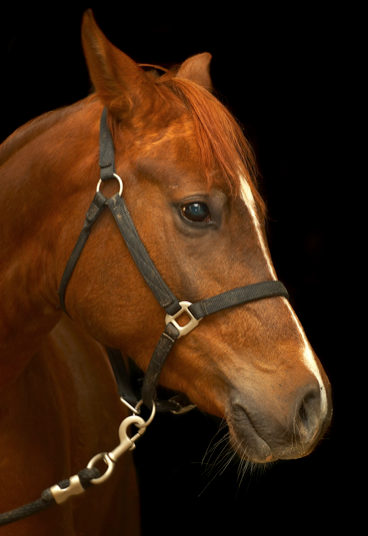 Horse Horse HD picture