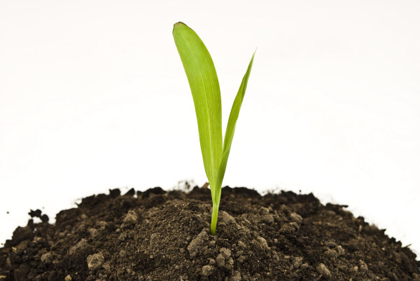 Images of growing plants in soil