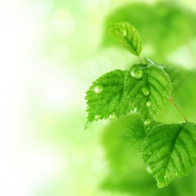 In green leafy Background 01   HD Images