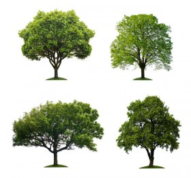 Large trees HD picture  5