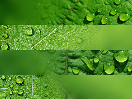 Leaves covered with water drops picture material