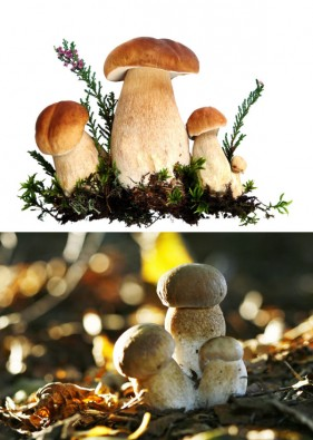 Mushrooms HD picture