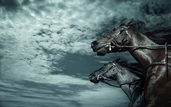 Running horse HD pic