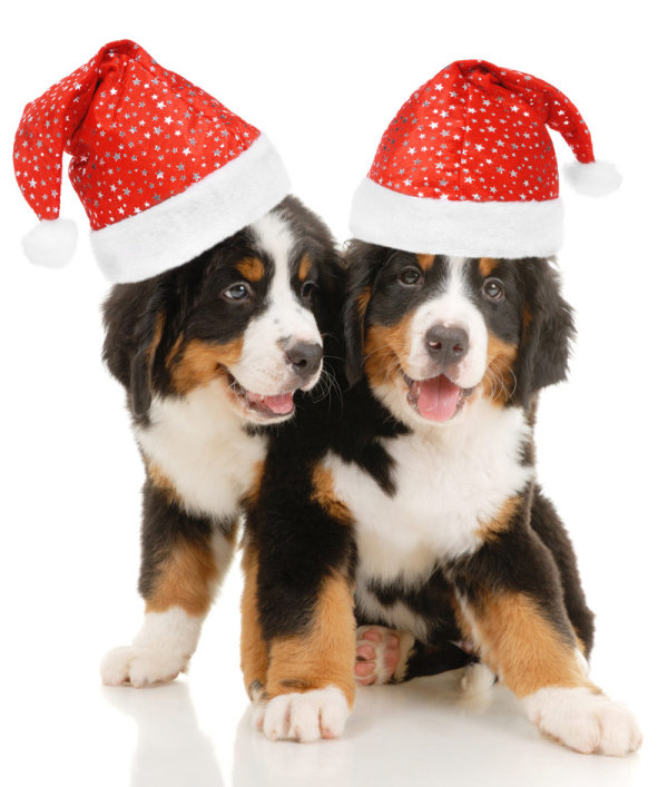 Santa Paws HD picture   high definition picture