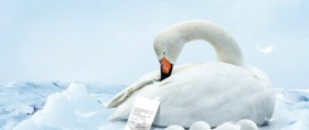 Swan HD Pictures