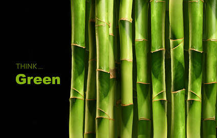 The bamboo grove close up picture material  2