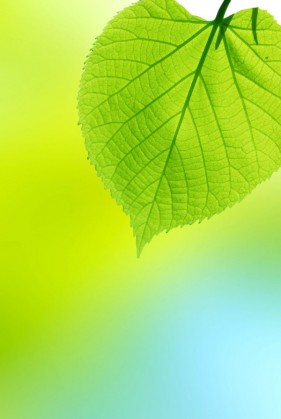 The beautifully green leafy background 01   HD Images