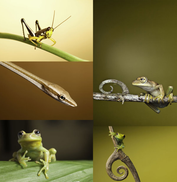 The grasshopper, snakes, tree frogs HD picture