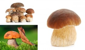 The mushrooms HD picture 4