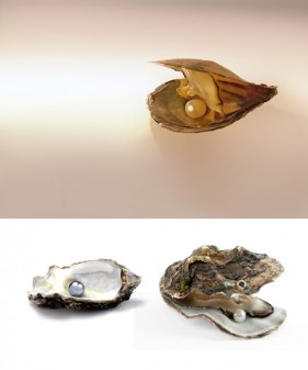 The pearl mussels HD picture