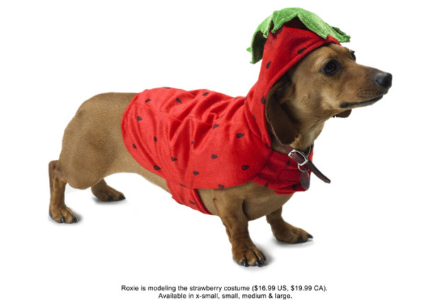 To wear strawberry installed puppy definition picture
