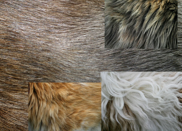 5 HD fur HD pictures