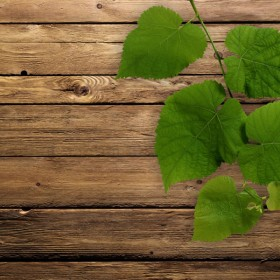 Green leafy wood background 01 HD Images
