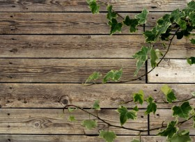 Green leafy wood background 02 HD Pictures