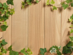 Green leafy wood background 04 HQ Pictures