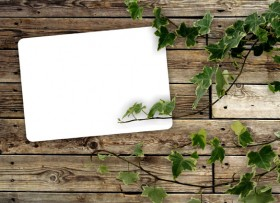 Green leafy wood background 05 HD Pictures