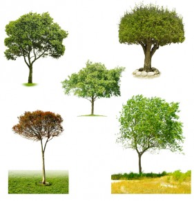 5 kinds of trees PSD material