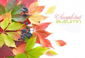 Beautiful autumn leaves 04 HD Pictures