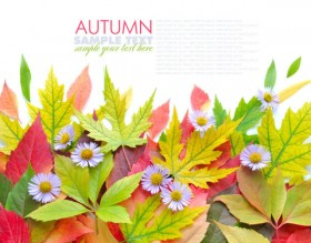 Beautiful autumn leaves 06 HD Pictures