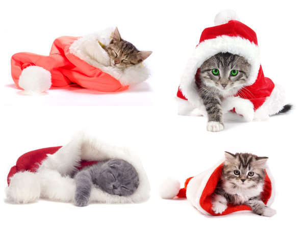 Cute Christmas hats and cat   HD Pictures