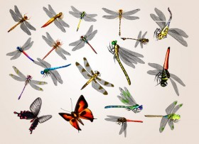 20 only dragonfly and butterfly psd material