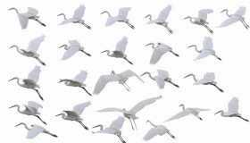 25 modes of flight of a crane PSD layered material
