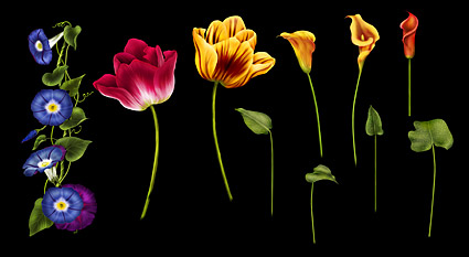 Computer draw flowers psd layered material
