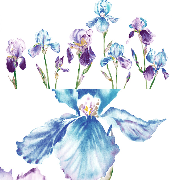 The watercolor style orchid flower PSD layered material