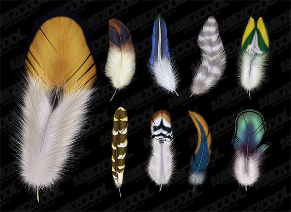 9 beautiful feathers psd material