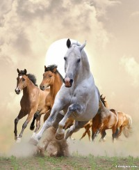 Horse HD picture 07