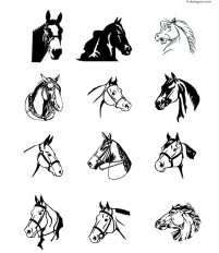 12 horse head design vector materials