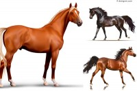 3 fabulous horse illustrator vector materials