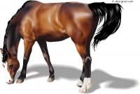 A realistic style horse vector material
