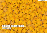 Autumn maple leaves background vector material
