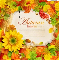 Beautiful autumn leaves background vector material