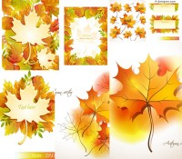 Beautiful autumn maple leaf design vector material
