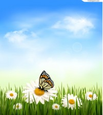 Beautiful daisy butterfly vector material