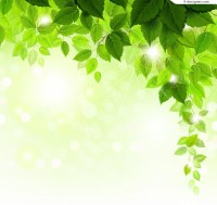 Beautiful summer leaves background vector material