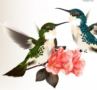 Delicate hummingbird flowers background vector material