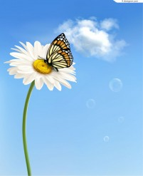 Fresh butterfly daisy background vector material