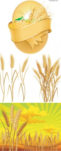 Golden wheat vector material